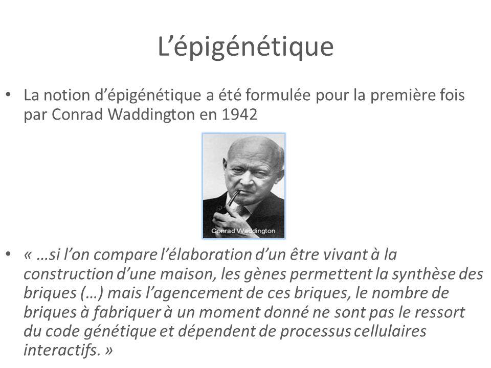 L'épigénétique La notion d'épigénétique a été formulée pour la première fois par Conrad Waddington en 1942.