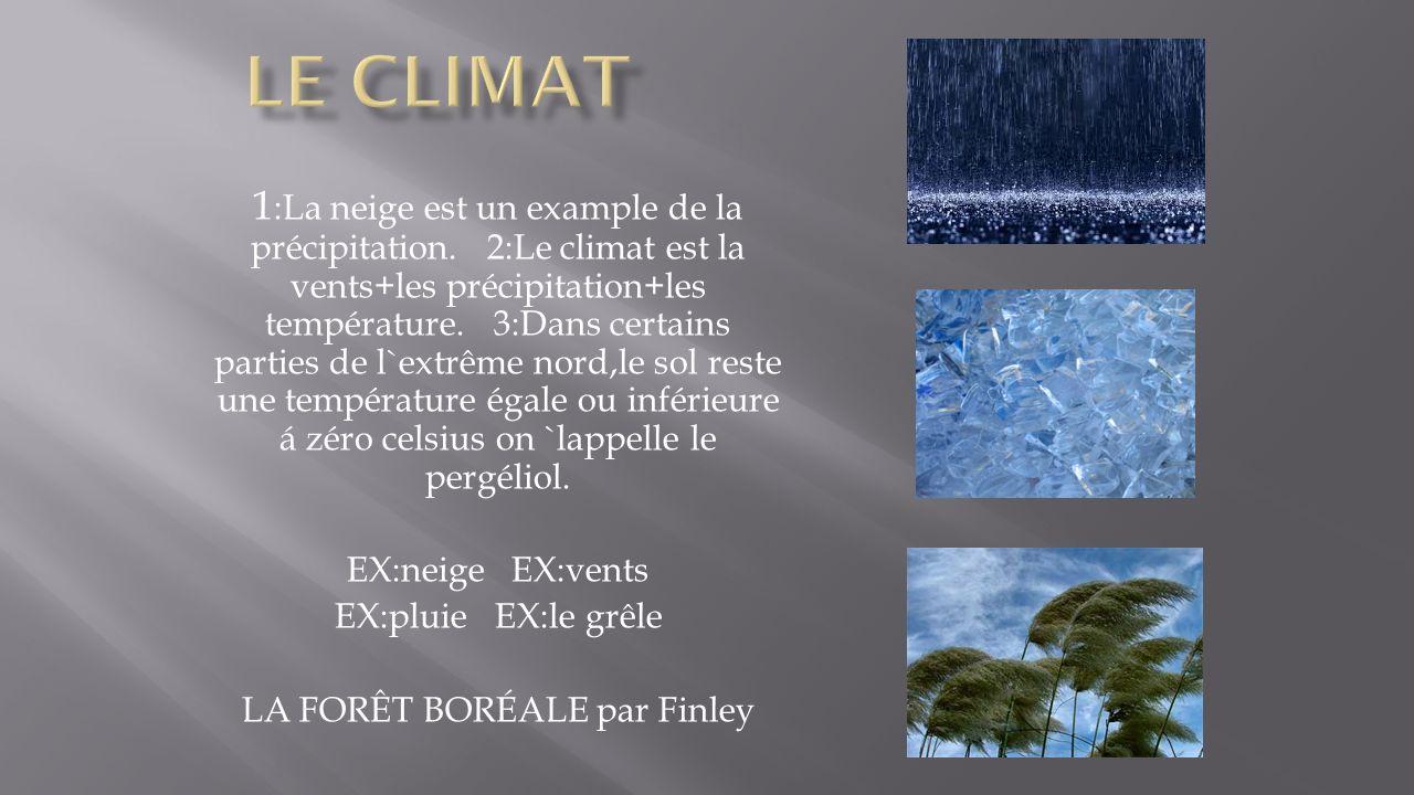LA FORÊT BORÉALE par Finley