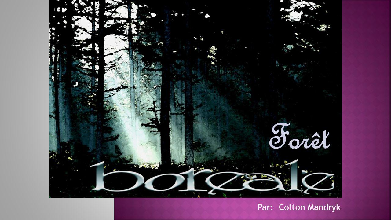 Forêt Par: Colton Mandryk