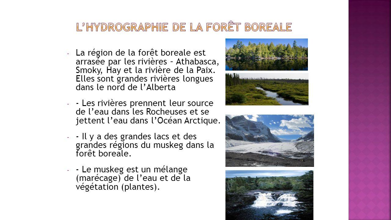 L'hydrographie de la forÊt boreale