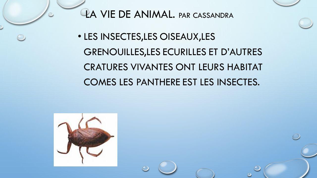 LA VIE DE ANIMAL. Par Cassandra