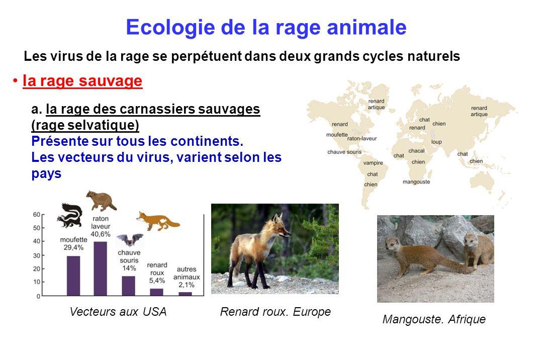 Ecologie de la rage animale