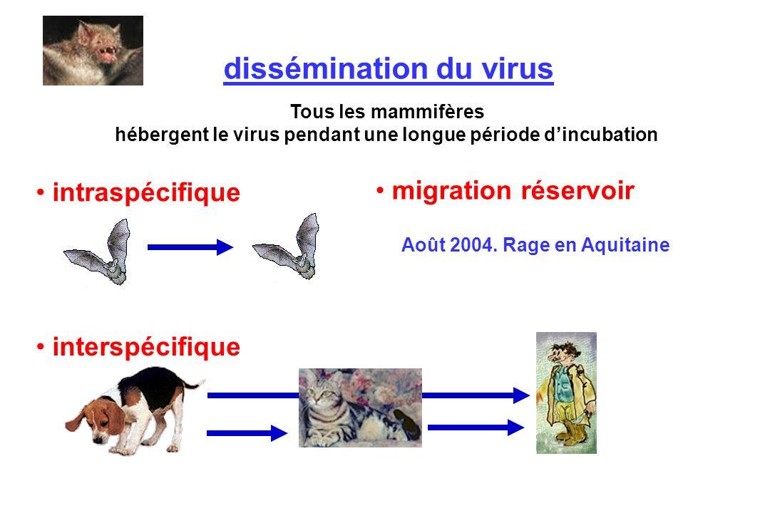 dissémination du virus