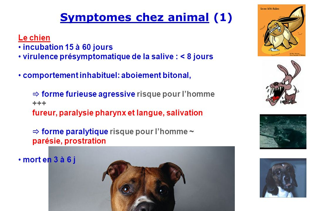 Symptomes chez animal (1)