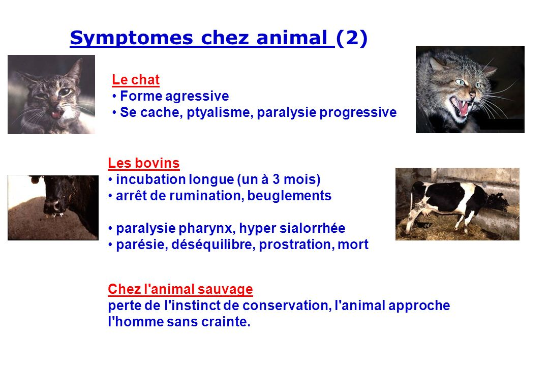 Symptomes chez animal (2)