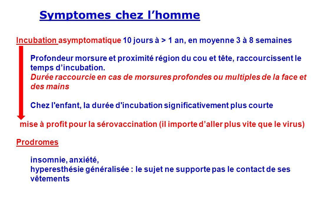 Symptomes chez l'homme