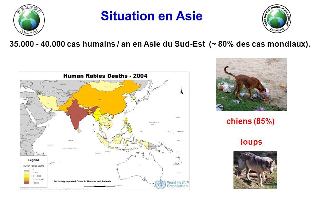 Situation en Asie 35.000 - 40.000 cas humains / an en Asie du Sud-Est (~ 80% des cas mondiaux). chiens (85%)
