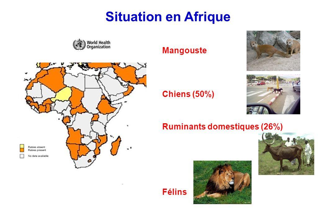 Situation en Afrique Mangouste Chiens (50%)