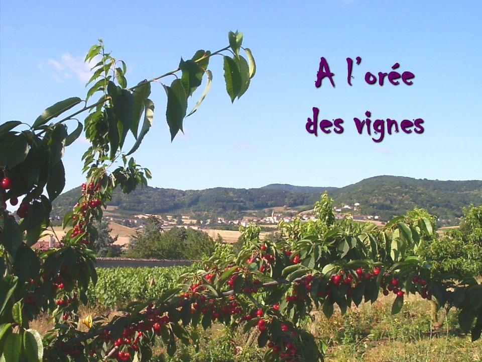 A l'orée des vignes