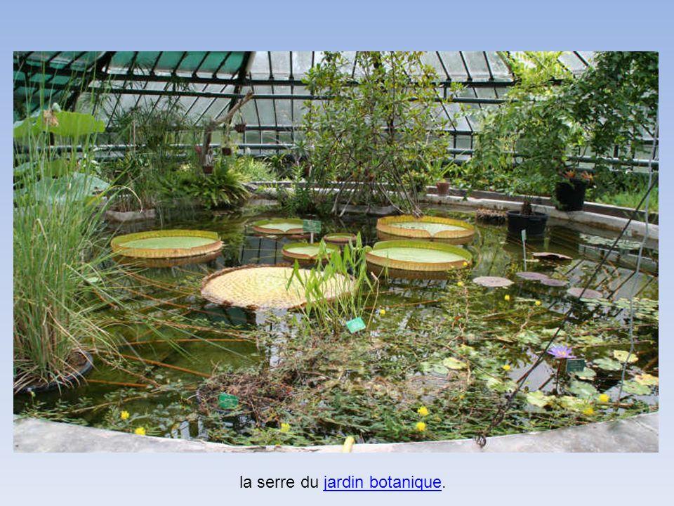 la serre du jardin botanique.