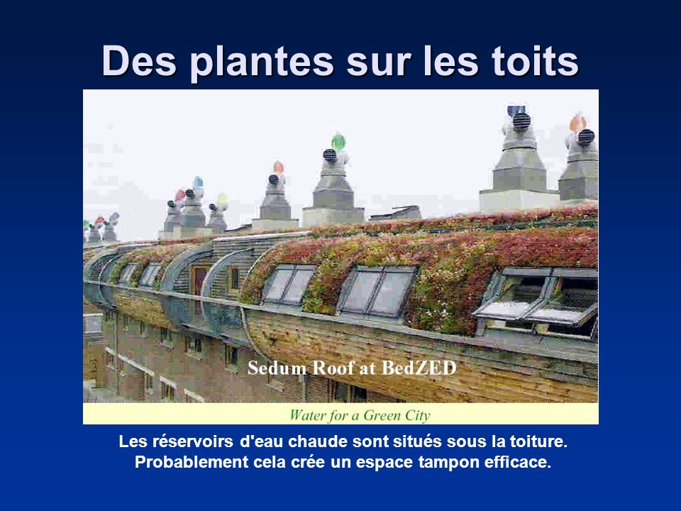 Des plantes sur les toits