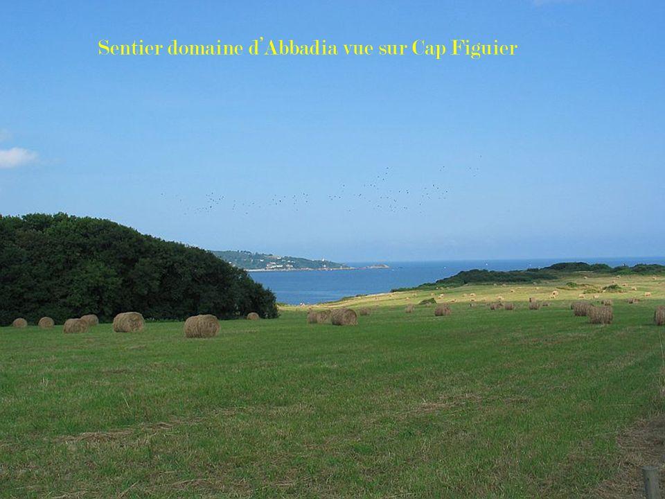 Sentier domaine d'Abbadia vue sur Cap Figuier