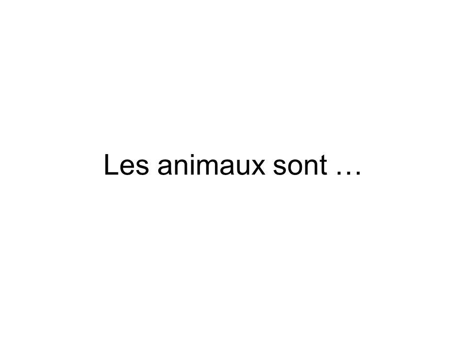 Les animaux sont …