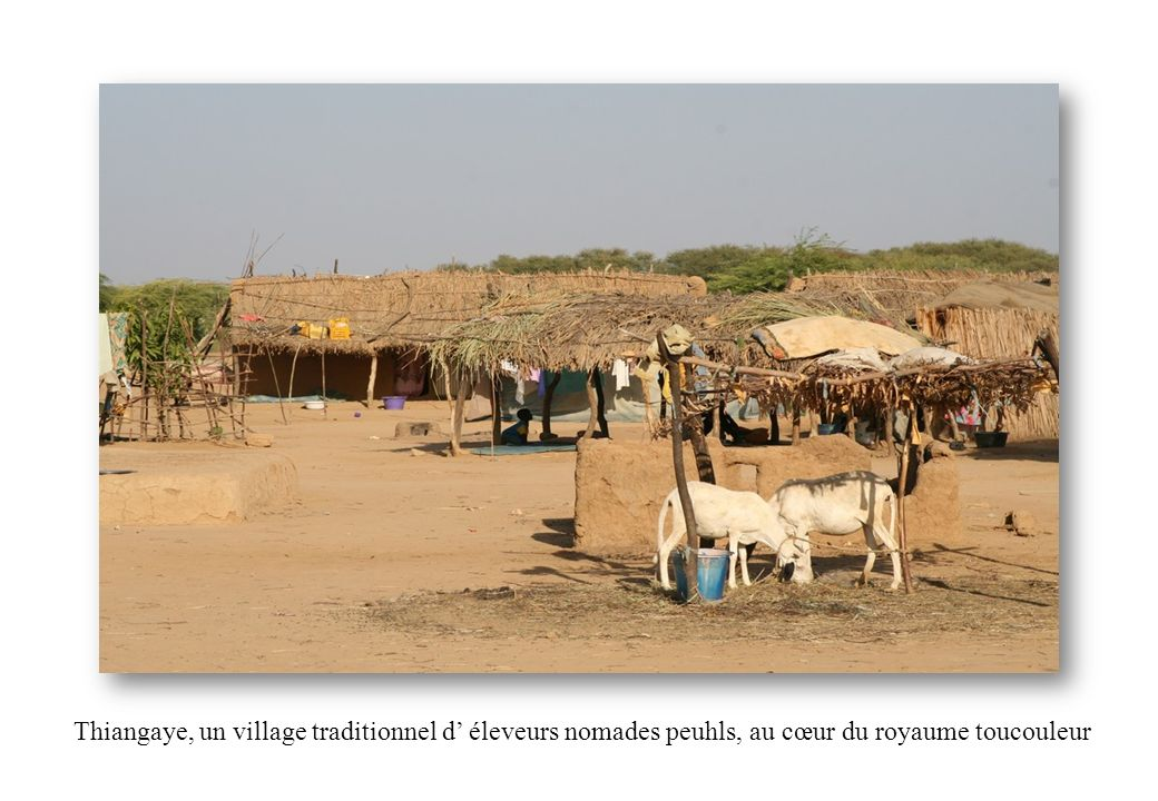 Thiangaye, un village traditionnel d' éleveurs nomades peuhls, au cœur du royaume toucouleur