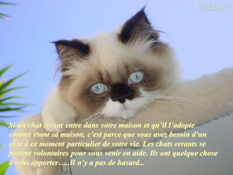 Si un chat errant entre dans votre maison et qu'il l'adopte comme étant sa maison, c est parce que vous avez besoin d un chat à ce moment particulier de votre vie. Les chats errants se portent volontaires pour vous venir en aide. Ils ont quelque chose à vous apporter…..Il n'y a pas de hasard...
