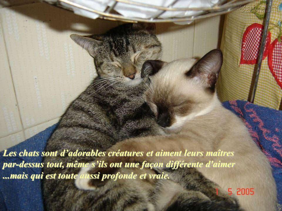 Les chats sont d'adorables créatures et aiment leurs maîtres par-dessus tout, même s'ils ont une façon différente d aimer ...mais qui est toute aussi profonde et vraie.
