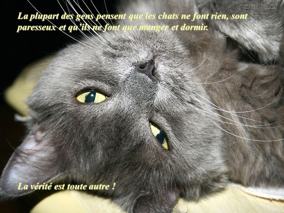 La plupart des gens pensent que les chats ne font rien, sont paresseux et qu'ils ne font que manger et dormir.