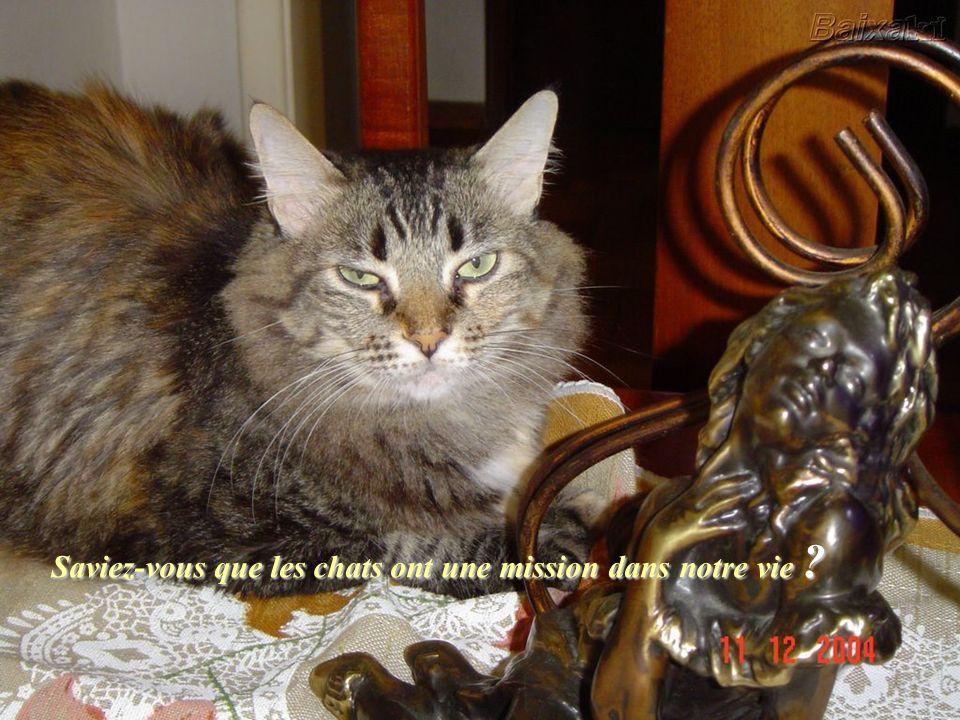Saviez-vous que les chats ont une mission dans notre vie