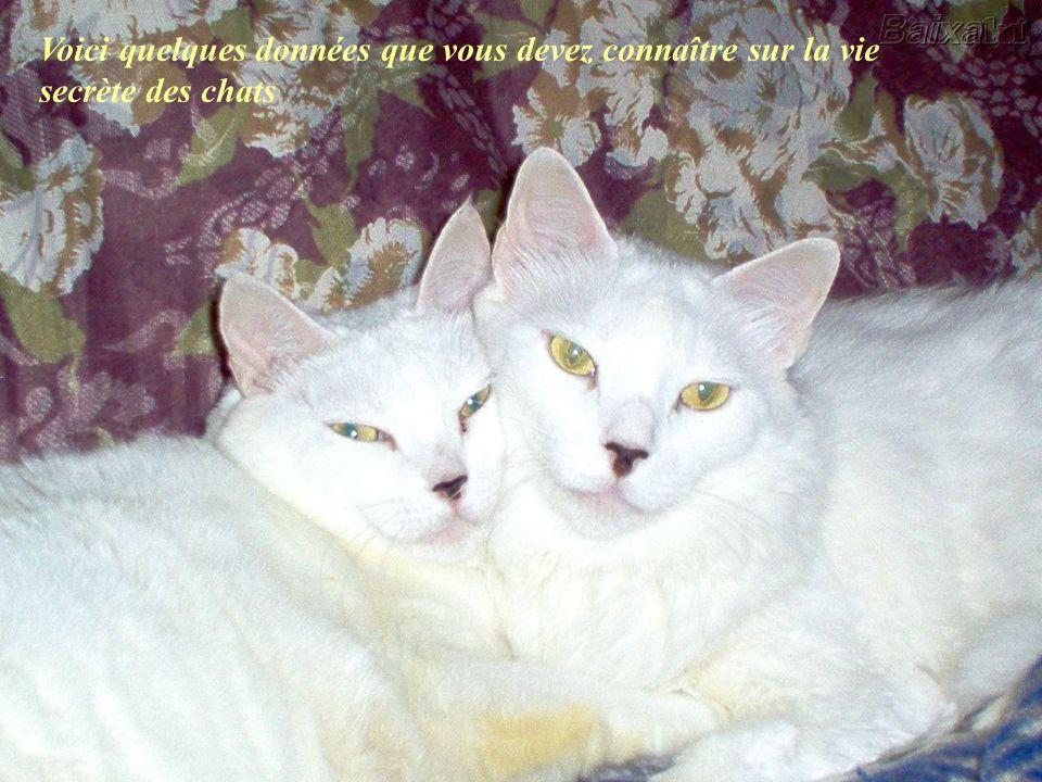 Voici quelques données que vous devez connaître sur la vie secrète des chats
