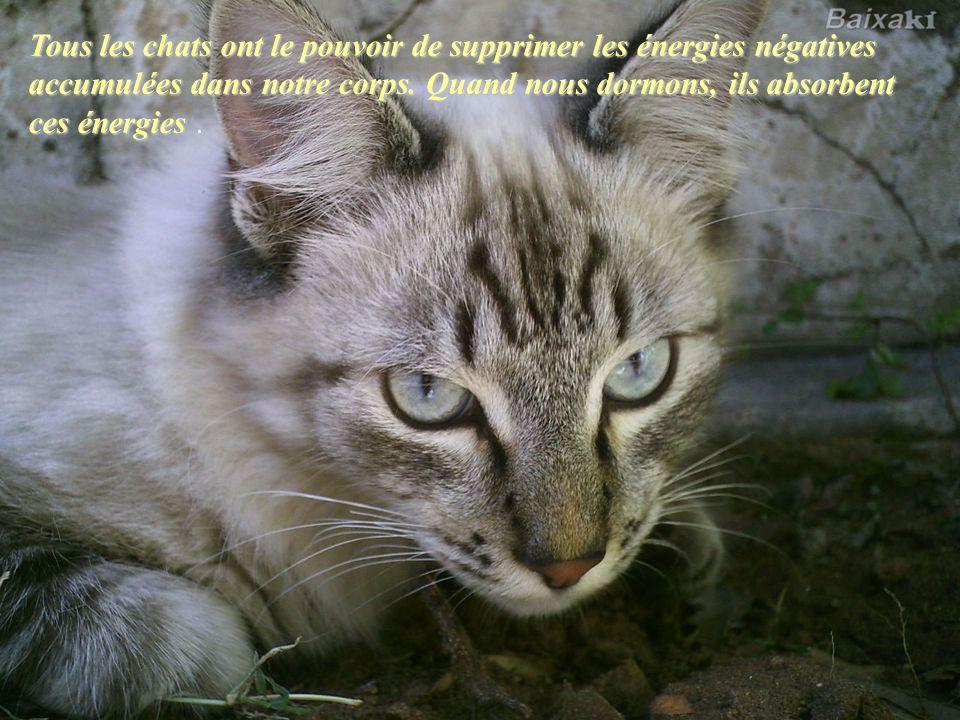 Tous les chats ont le pouvoir de supprimer les énergies négatives accumulées dans notre corps. Quand nous dormons, ils absorbent ces énergies .