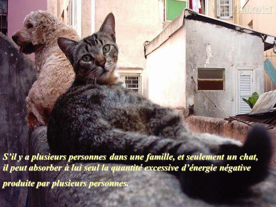 S'il y a plusieurs personnes dans une famille, et seulement un chat, il peut absorber à lui seul la quantité excessive d'énergie négative produite par plusieurs personnes.