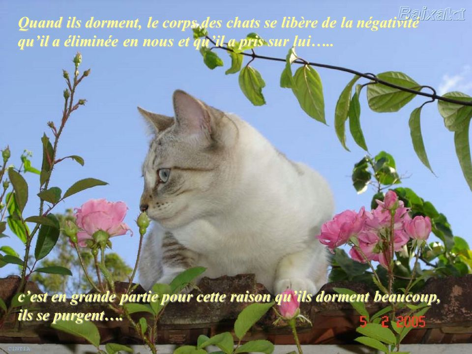 Quand ils dorment, le corps des chats se libère de la négativité qu'il a éliminée en nous et qu'il a pris sur lui…..