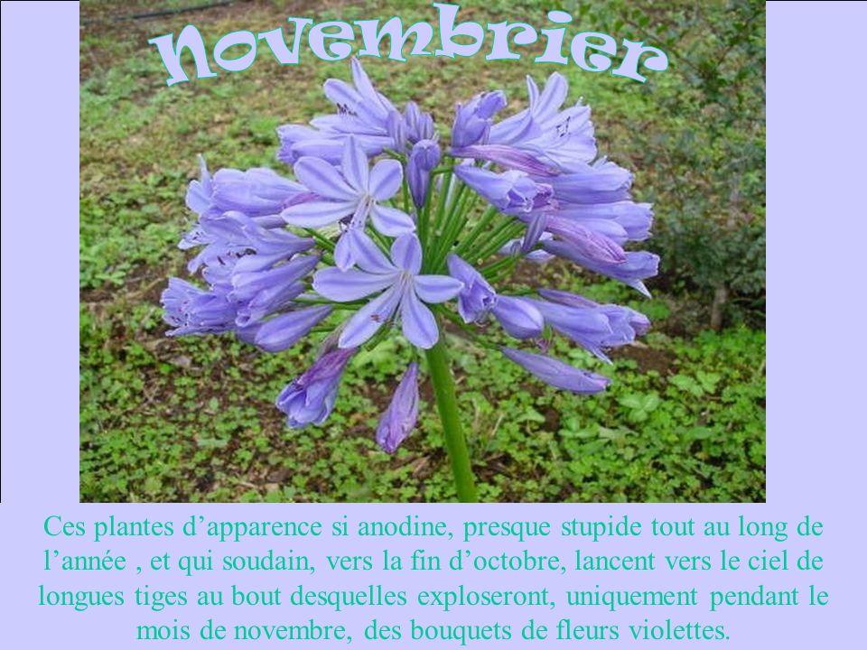 Novembrier