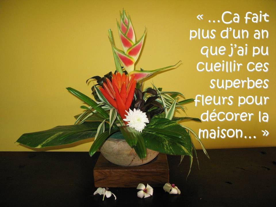 « …Ca fait plus d'un an que j'ai pu cueillir ces superbes fleurs pour décorer la maison… »