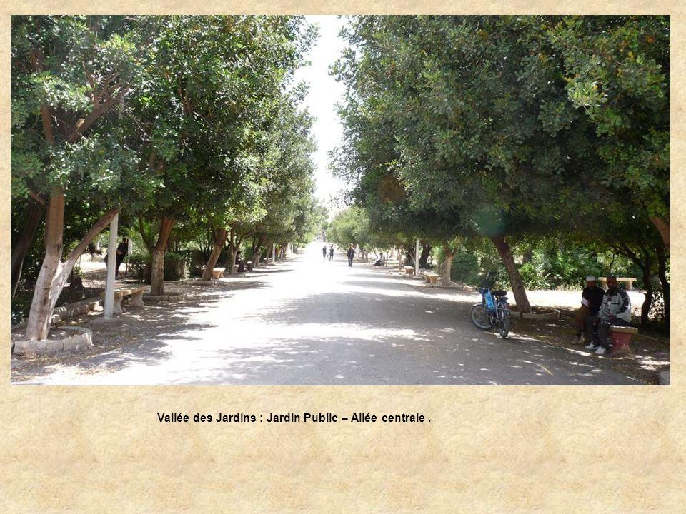 Vallée des Jardins : Jardin Public – Allée centrale .