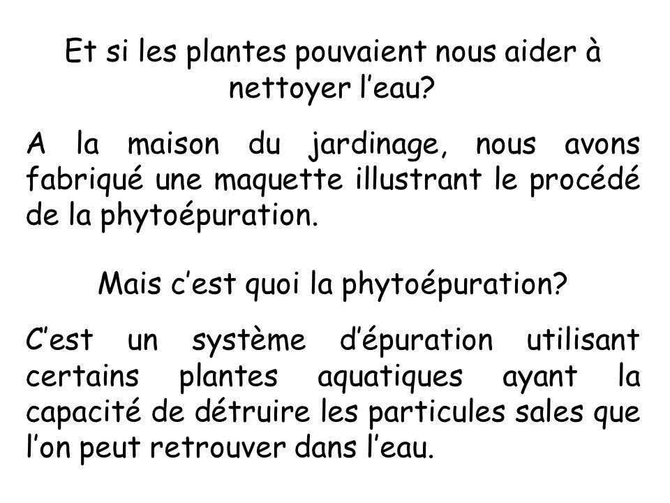 Et si les plantes pouvaient nous aider à nettoyer l'eau