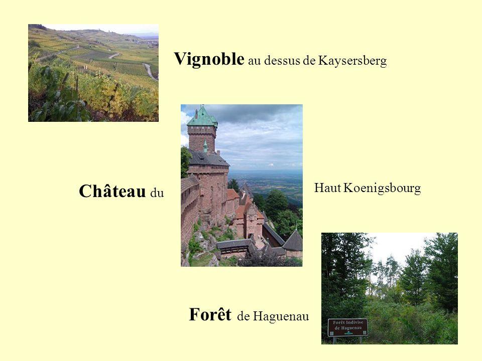 Vignoble au dessus de Kaysersberg