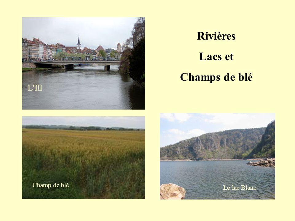 Rivières Lacs et Champs de blé