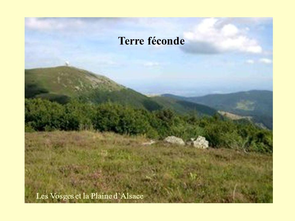 Les Vosges et la Plaine d'Alsace