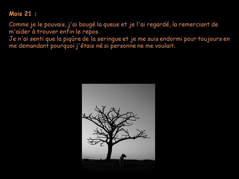 Mois 21 :