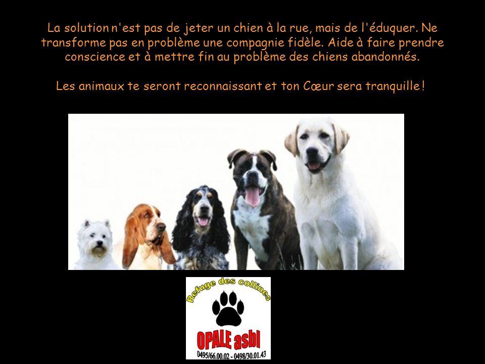 Les animaux te seront reconnaissant et ton Cœur sera tranquille !