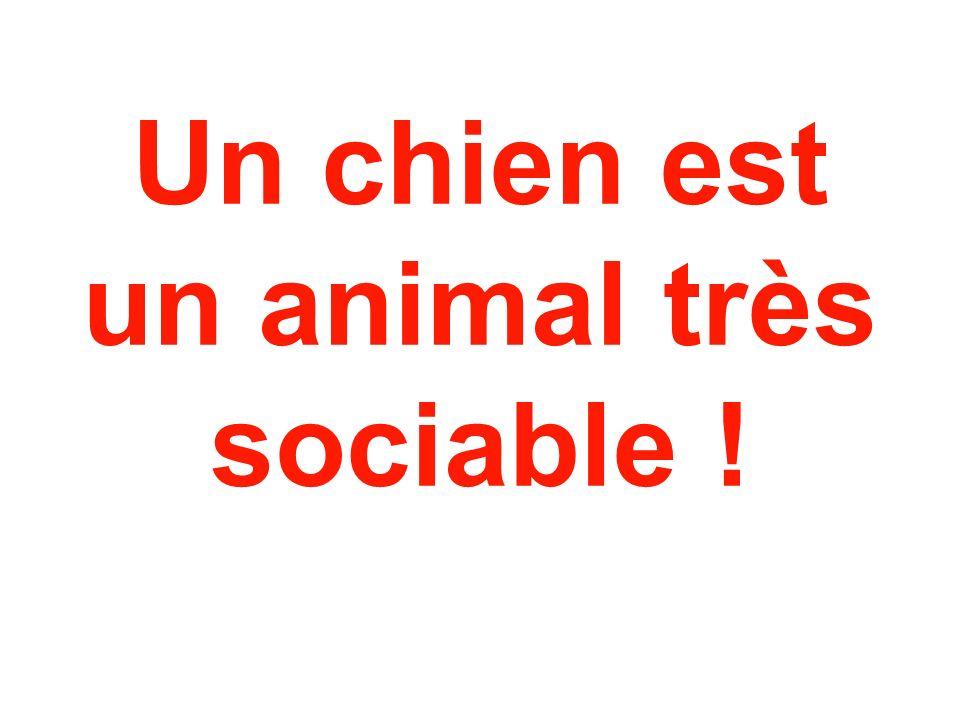 Un chien est un animal très sociable !