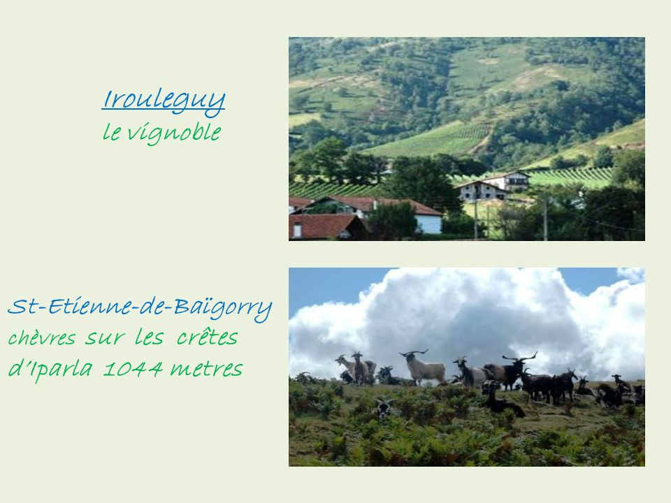 Irouleguy le vignoble St-Etienne-de-Baïgorry chèvres sur les crêtes d'Iparla 1044 metres