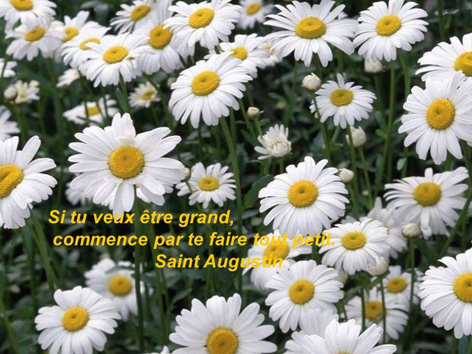 Si tu veux être grand, commence par te faire tout petit. Saint Augustin