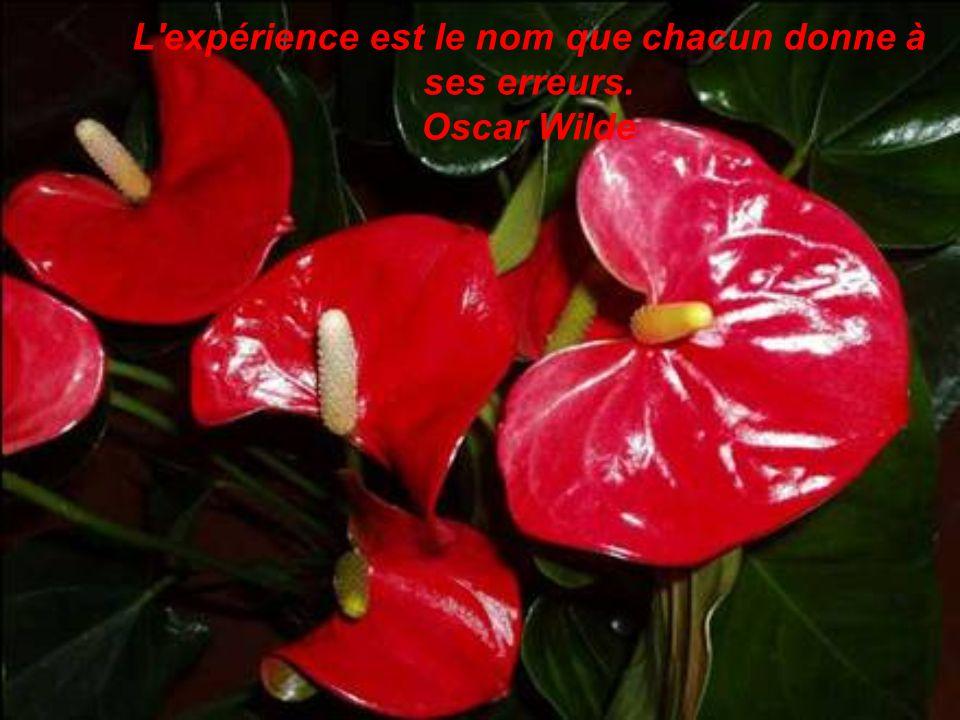 L expérience est le nom que chacun donne à ses erreurs. Oscar Wilde