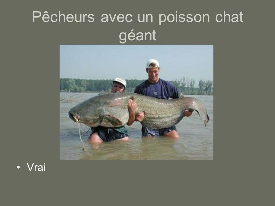 Pêcheurs avec un poisson chat géant