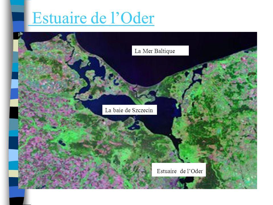 Estuaire de l'Oder Estuaire de l'Oder La Mer Baltique