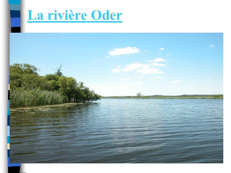 La rivière Oder