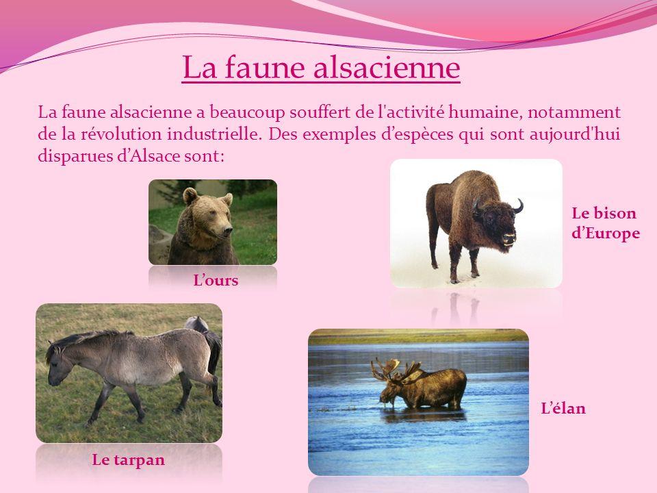 La faune alsacienne