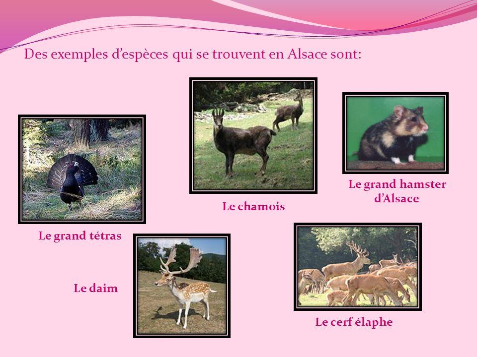 Des exemples d'espèces qui se trouvent en Alsace sont: