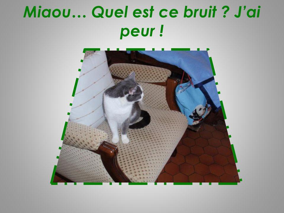 Miaou… Quel est ce bruit J'ai peur !