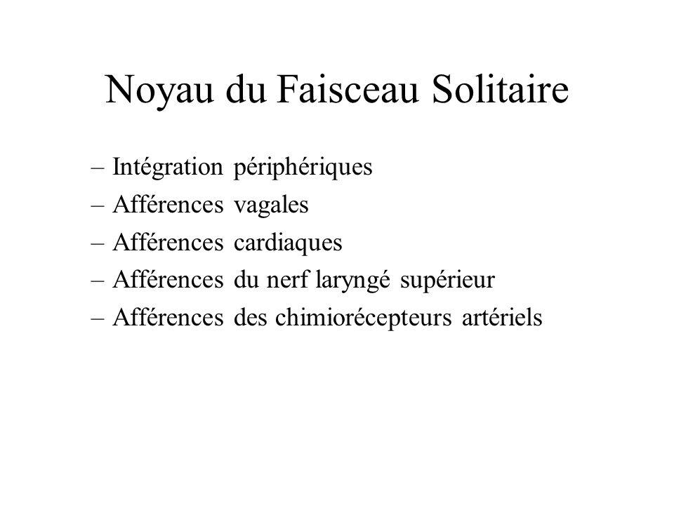 Noyau du Faisceau Solitaire