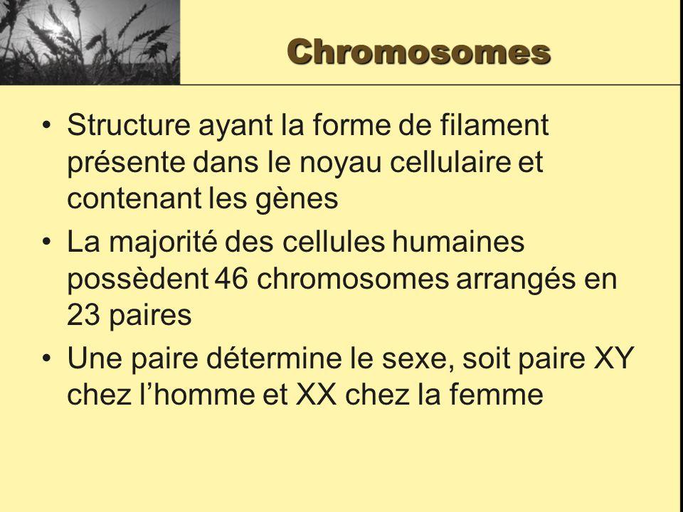 Chromosomes Structure ayant la forme de filament présente dans le noyau cellulaire et contenant les gènes.
