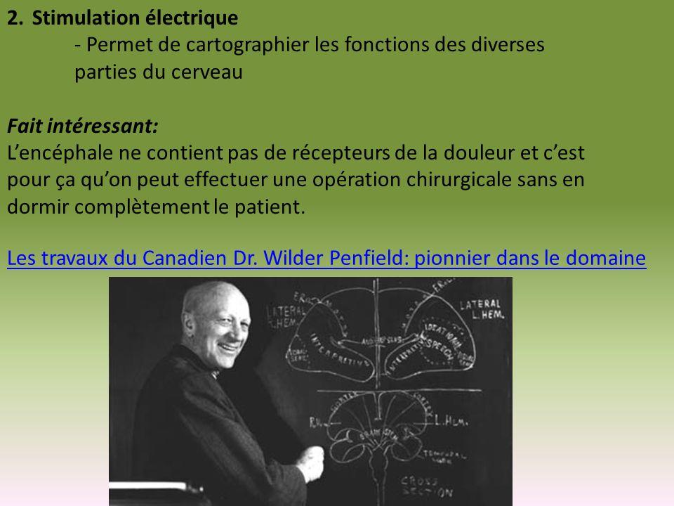 Stimulation électrique