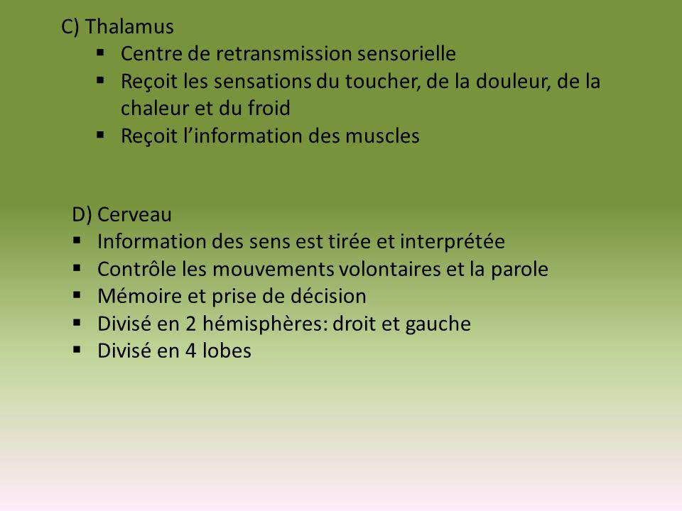 C) Thalamus Centre de retransmission sensorielle. Reçoit les sensations du toucher, de la douleur, de la chaleur et du froid.