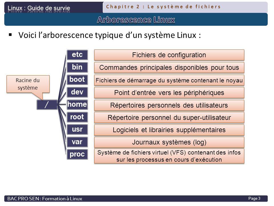 Voici l'arborescence typique d'un système Linux :